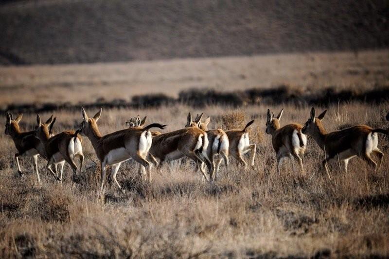 بیماری های واگیر دامی عامل تهدید کننده تنوع زیستی
